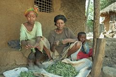 Village life Ethiopian mother and girl clean herbs. Ethiopia, Oromia, village CHANCHO Gaba Robi: Oromo, largest ethnic population group in Ethiopia, woman sits Royalty Free Stock Images