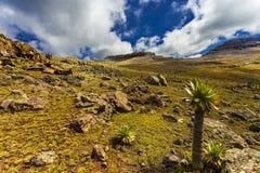Ras Dashen, Simien NP Royalty Free Stock Image