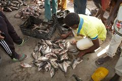 African fish market Royalty Free Stock Image