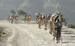 Ethiopian Camel Caravan 2 Royalty Free Stock Photos