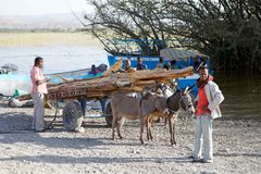 Ethiopian donkey carriage Royalty Free Stock Photo