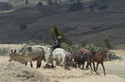 Ethiopian Farmer Stock Photo