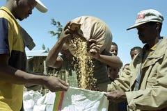 Ethiopian farmer sells on market grain to buyers stock photo