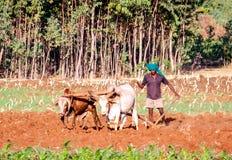 Ethiopian farmer Stock Image