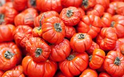 Ethiopian food red tomato Solanum aethopicum, Tropical Africa Mock vegetables harvest background. Selective focus photo Royalty Free Stock Images