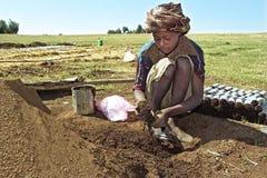 Ethiopian girl working in reforestation project. Ethiopia, Oromia, village CHANCHO Gaba Robi reforestation project. A young girl with headscarf is putting Stock Images