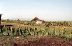 Ethiopian hut Stock Images