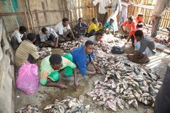 African fish market Royalty Free Stock Images