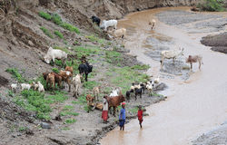 Ethiopian people with cattle Stock Images