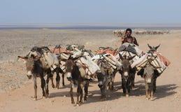 Ethiopian salt caravan Royalty Free Stock Photo