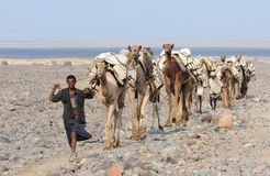 Ethiopian salt caravan Royalty Free Stock Photos