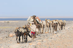 Ethiopian salt caravan Royalty Free Stock Images
