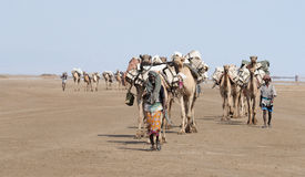 Ethiopian salt caravan Stock Photography