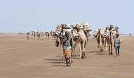 Ethiopian salt caravan Stock Photography