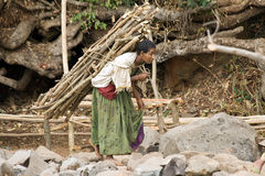 Ethiopian woman carries wood. Stock Photography
