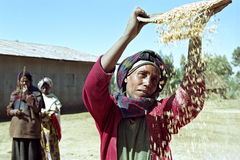 Ethiopian woman separate chaff from the grain. Ethiopia, Sululta district, Chancho Gaba Robi village, Oromo woman, largest Ethiopian ethnic population group, is Royalty Free Stock Images