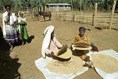 Ethiopian women separate chaff from the grain. Ethiopia, Sululta district, Chancho Gaba Robi village, Oromo women, largest Ethiopian ethnic population group, is Stock Photography