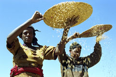 Ethiopian women separate chaff from the grain Stock Photos