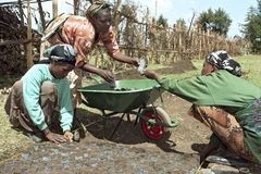Ethiopian women work in reforestation project. Ethiopia, Oromia, village Holeta: reforestation project. Women working together. Women put the mixed earth with Royalty Free Stock Photo