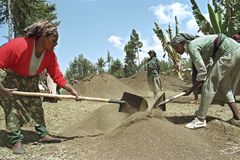 Ethiopian women work in reforestation project. Ethiopia, Oromia, village Holeta: reforestation project. Women working together. Women stand with spades mix earth Royalty Free Stock Photos