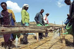 Ethiopians Watering Saplings With Watering Cans Stock Photos
