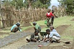 Ethiopians working in reforestation project. Ethiopie, regio Oromia, dorp Holeta: reforestation project, women putting fertile nursery earth in plastic bags Stock Photos