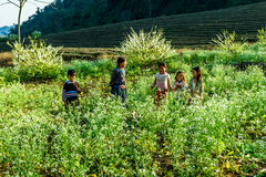 Ethnic children playing in a plum plantation on Lunar new year's occasion. Royalty Free Stock Photo