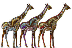 Ethnic giraffes Royalty Free Stock Photography