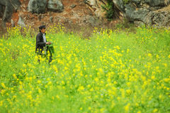 Ethnic minorities man on canola field. Near Dong Van market, Ha Giang province, Vietnam. Ha Giang is one of the six poorest provinces of Vietnam. Ha Giang is a Royalty Free Stock Image