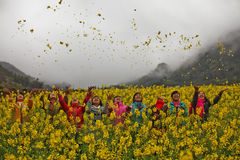 Ethnic minority girls in a field of canola. At Quan Ba, Ha Giang province, Vietnam. Ha Giang is one of the six poorest provinces of Vietnam. Ha Giang is a Royalty Free Stock Photos