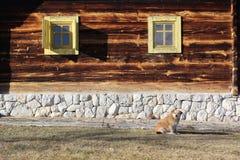 Ethnohuis en hond stock foto