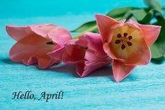 Etichetta ciao aprile con tre tulipani rosa Immagini Stock Libere da Diritti