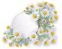 Etichetta con i fiori della camomilla selvatica Fotografia Stock