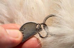 Etichetta consumata di nome del cane fotografia stock libera da diritti
