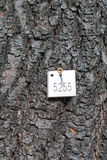 Etichetta dell'albero Fotografia Stock Libera da Diritti