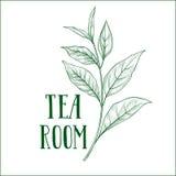 Etichetta dell'erba del ramo di albero del tè verde con le foglie e la STANZA del TÈ dell'iscrizione Immagine Stock