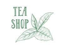 Etichetta dell'erba del ramo di albero del tè verde NEGOZIO del TÈ dell'iscrizione, foglie Immagini Stock Libere da Diritti