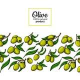 Etichetta dell'olio d'oliva Illustrazione disegnata a mano di vettore del ramo con la b Fotografie Stock Libere da Diritti
