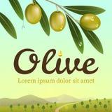 Etichetta delle olive verdi Ramo di ulivo realistico su un fondo un'azienda agricola verde oliva Fotografia Stock