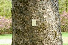 Etichetta di identificazione di specie dell'albero fotografia stock