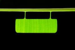 Etichetta di tiraggio della foglia della banana immagine stock libera da diritti