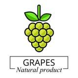 Etichetta di verde dell'uva del fumetto Fotografia Stock Libera da Diritti