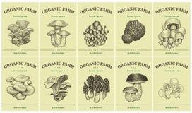 Etichette con i vari funghi Metta i prezzi da pagare dei modelli per i negozi ed i mercati di alimento biologico Arte dell'illust Immagini Stock Libere da Diritti