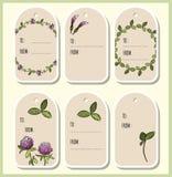 Etichette del regalo dei fiori e delle foglie del trifoglio Il vettore contrassegna l'accumulazione illustrazione di stock