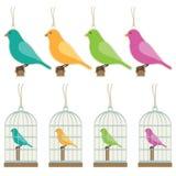 Etichette del regalo dell'uccello Fotografia Stock