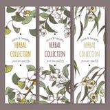 Etichette a tre colori con il ginkgo, il gelsomino e l'eucalyptus su bianco Immagine Stock