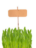 Etikett i gräs Arkivfoto