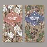 2 etiketter med färg för teträd- och camphorwoodfilial skissar på tappningbakgrund Arkivbild