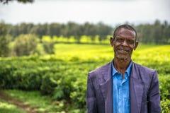Etiopisk bonde på en tekoloni nära Jimma, Etiopien Arkivbild