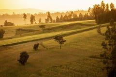 Etiopiska högländer på gryning Arkivbild
